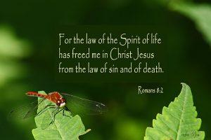 Romans 8.2